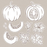 Vector botanical set with  pumpkins, flowers and leaves. Vector botanical set with  pumpkins, flowers and leaves Royalty Free Stock Photos