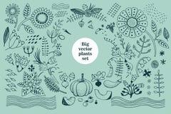 Vector botany collection. Retro illustration set Royalty Free Stock Photo