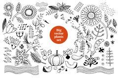 Vector botany collection. Retro illustration set Stock Image