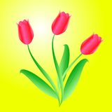 Vector bouquet from  beautiful tulips Royalty Free Stock Photography