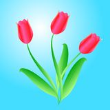 Vector bouquet from beautiful tulips Stock Photography