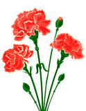 Vector bouquet of Carnations. Vector bouquet of red Carnations. Vector illustration Stock Illustration