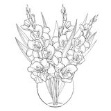 Vector bouquet with Gladiolus or sword lily in vase. Flower bud and leaf in black isolated on white background. Floral elements. Stock Images