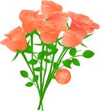Vector bouquet of orange tea roses. With round floral label for you Royalty Free Stock Images