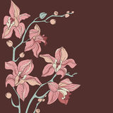 Vector Bouquet of Orchids Stock Photography