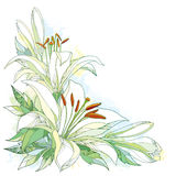Vector bouquet with ornate white Lily flower, buds and leaves on white background with blots in pastel. Corner composition with lilies. Floral background in stock illustration