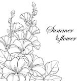 Vector bouquet with outline Alcea rosea or Hollyhock flower Stock Images