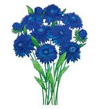 Vector bouquet with outline blue Aster flower, ornate green foliage and bud isolated on white background. Contour blossom Aster. Royalty Free Illustration