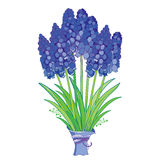 Vector bouquet with outline blue muscari or grape hyacinth flowers and green leaves isolated on white. Ornate floral elements. Stock Photography