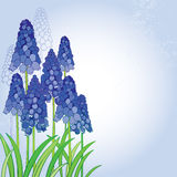 Vector bouquet with outline blue muscari or grape hyacinth flowers and green leaves on the pastel back. Spring floral elements. Stock Photography