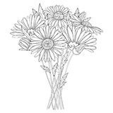 Vector bouquet with outline Chamomile flowers, bud and leaf isolated on white background. Ornate Chamomiles in contour style. Royalty Free Stock Image