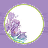 Vector bouquet with outline crocus or saffron flowers and leaves in round frame on the violet back. Greeting card with crocuses. Stock Photo