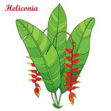 Vector bouquet with outline Heliconia rostrata or lobster claws red flower and green leaves  on white background. Royalty Free Stock Photography