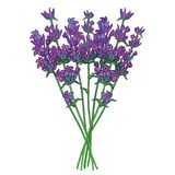 Vector bouquet with outline Lavender or Lavandula flower bunch and bud in violet isolated on white background. Ornate fragrance Lavender herb in contour style royalty free illustration
