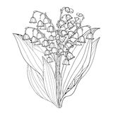 Vector bouquet with outline Lily of the valley or Convallaria flowers and leaves isolated. Floral element for spring design.i Stock Photos