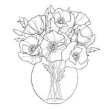 Vector bouquet with outline Poppy flower in the round transparent vase isolated on white. Ornate floral in contour style. Royalty Free Stock Images
