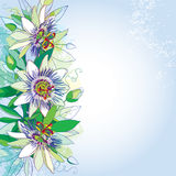 Vector bouquet with outline tropical Passiflora or Passion flowers, bud and foliage on the pastel  background. Greeting card. Royalty Free Stock Photos