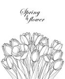Vector bouquet with outline tulip flowers, bud and ornate leaves in black isolated on white background. Bunch of contour tulips. Vector bouquet with outline stock illustration
