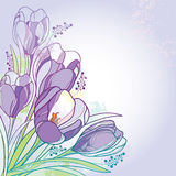 Vector bouquet with outline violet crocus or saffron flowers and green leaves on the pastel background. Greeting card with crocus. Stock Photography