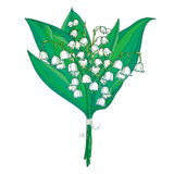 Vector bouquet with outline white Lily of the valley or Convallaria flowers and green leaves isolated on white. Royalty Free Stock Images