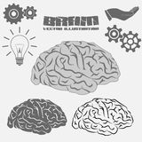 Vector Brain icon Royalty Free Stock Images