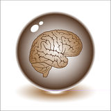 Vector brain illustration. Simply change. Other medical vectors you can see in my portfolio Royalty Free Stock Photo