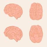 Vector brain illustration, Royalty Free Stock Photo