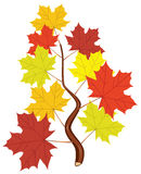 Vector branch with fall maple leaves Stock Photography