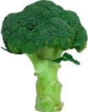 Vector bróculos Foto de Stock