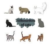 Vector breed cats icons set. Collection different kitten layout flat cover Royalty Free Stock Images