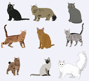 Vector breed cats icons set. Collection different kitten layout flat cover royalty free illustration