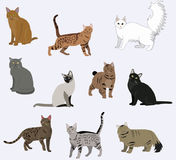 Vector breed cats icons set. Collection different kitten layout flat cover Stock Images