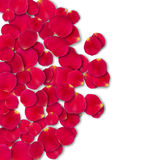 Vector bright roses petals. Lie. A lot of pink petals on white background. Nature view from above Royalty Free Stock Photos