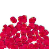 Vector bright roses petals. Lie. A lot of pink petals on white background. Nature view from above Stock Photo