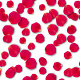 Vector bright roses petals. Vector seamless pattern bright roses petals lie. A lot of pink petals on white background. Nature view from above Stock Photo