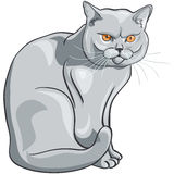 Vector british blue cat sits and looks seriously. British blue cat with orange eyes sits and looks seriously Stock Photo