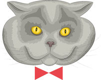 Vector British cat. Royalty Free Stock Images