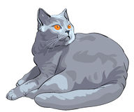 Vector British shorthair blue cat lies and looks. British Shorthair blue cat with orange eyes lies and looks on a white background Stock Photography
