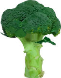 Vector broccoli stock photo
