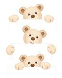 Vector brown bears cartoons. Stock Photos