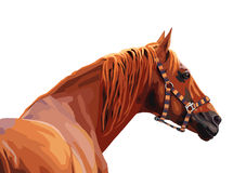 Vector of brown horse. On white Stock Photos