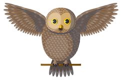 Vector brown owl spreading wings Stock Photo