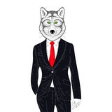 Vector brutal wolf in elegant classic suit. Hand drawn anthropom Royalty Free Stock Photos
