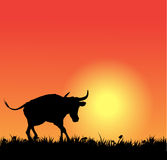 Vector bull silhouette on sunset Stock Images