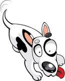 Vector bull terrier royalty free stock photo