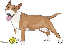 Vector Bull Terrier dog. Royalty Free Stock Photo