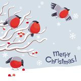 Vector bullfinches and rowan Christmas image royalty free illustration