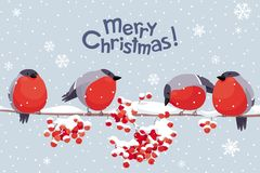 Vector bullfinches and rowan Christmas image stock illustration