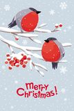 Vector bullfinches and rowan Christmas image vector illustration