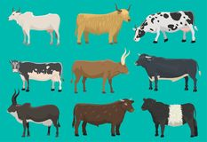 Vector bulls and cows farm animal cattle mammal nature beef agriculture and domestic rural bovine horned cartoon buffalo. Character illustration. Farming Stock Photo